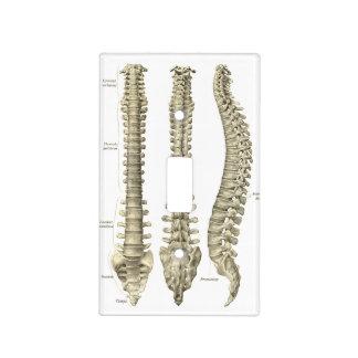 Quiropráctica de la anatomía de la espina dorsal cubiertas para interruptor