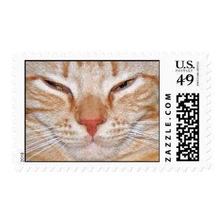 Quite Frankeh Stamps