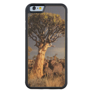 Quiver Trees (Aloe Dichotoma) Carved Maple iPhone 6 Bumper Case