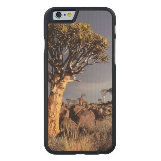 Quiver Trees (Aloe Dichotoma) Carved Maple iPhone 6 Slim Case