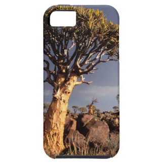 Quiver Trees (Aloe Dichotoma) iPhone 5 Cases