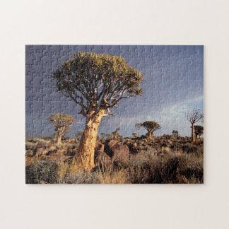 Quiver Trees (Aloe Dichotoma) Jigsaw Puzzle