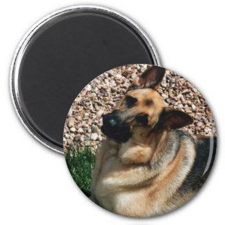Quizzical German Shepherd 2 Inch Round Magnet