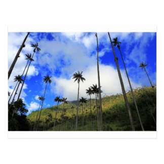 Qunidio wax palms in Cocora Valley of Colombia Postcard