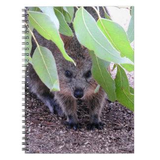 Quokka Notebook