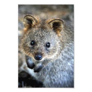 Quokka Western Australian Marsupial Photo Print