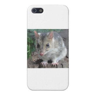 Quoll de Tasmania iPhone 5 Funda