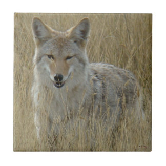 R0002 Coyote in Tall Grass Ceramic Tile