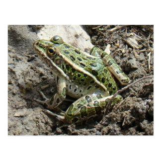 R0003 Leopard Frog Postcard