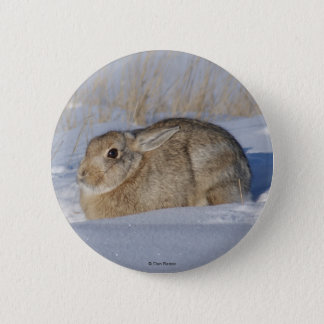 R0005 Cottontail Rabbit in Snow button