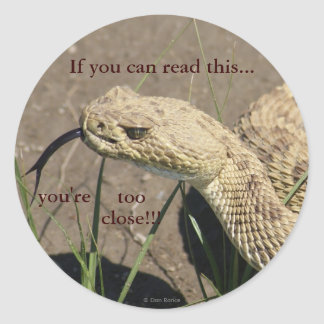 R0008 Prairie Rattlesnake head shot Sticker