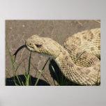 R0008 Rattlesnake Poster