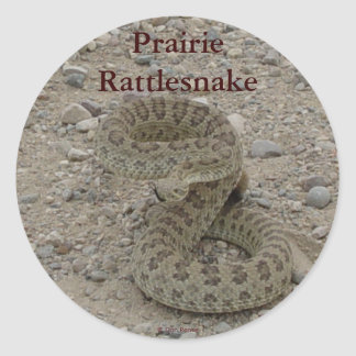 R0009 Prairie Rattlesnake coiled Classic Round Sticker