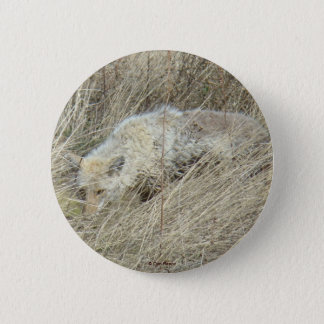 R0013 Coyote in Tall Grass button