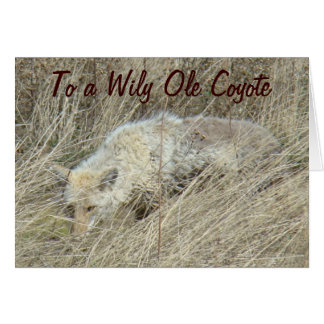 R0013 Coyote in Tall Grass Card