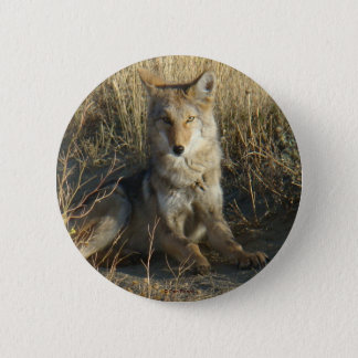 R0015 Coyote Laying button
