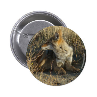 R0016 Coyote Scratching button
