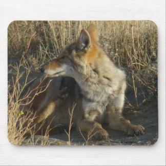 R0016 Coyote Scratching mouse pad