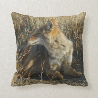 R0016 Coyote Scratching Throw Pillow