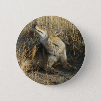R0017 Coyote Scratching button