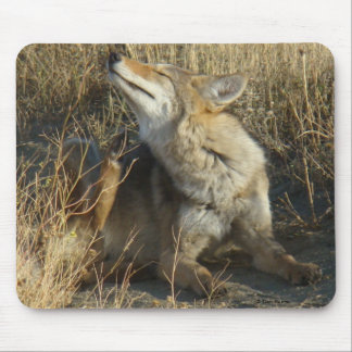 R0017 Coyote Scratching mouse pad