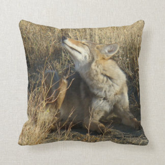 R0017 Coyote Scratching Throw Pillow