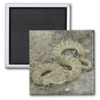 R0020 Prairie Rattlesnake Magnet