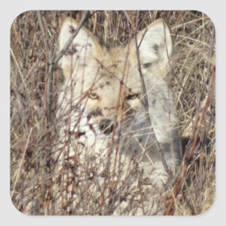 "R0021 Coyote ""Watching You"" Square Sticker"