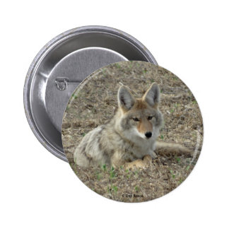 R0022 Coyote Laying Pinback Button