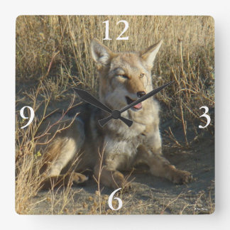 R18 Coyote Laying Square Wall Clock