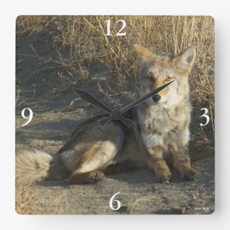 R19 Coyote Laying Square Wall Clock