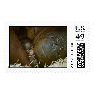 r2972947481 stamps