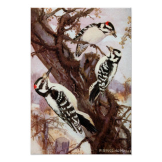 R. Bruce Horsfall - Downy and Hairy Woodpeckers Poster