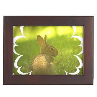 rabbit-11 jpg memory box