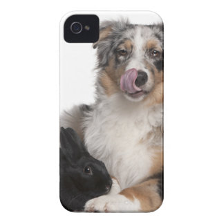 Rabbit (1 year old) lying next to an Australian Case-Mate iPhone 4 Case