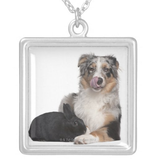 Rabbit (1 year old) lying next to an Australian Square Pendant Necklace