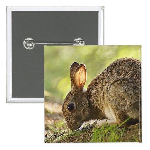 Rabbit 2 Inch Square Button