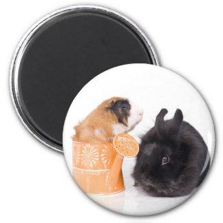 rabbit and guinea pig imán redondo 5 cm