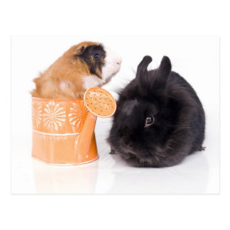rabbit and guinea pig postal