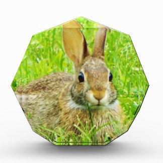 rabbit award