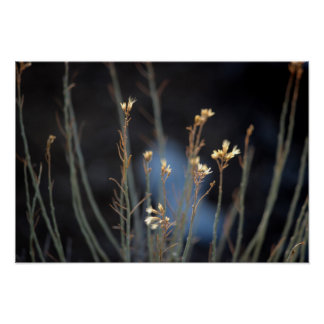 Rabbit Brush Blossoms in Winter Poster