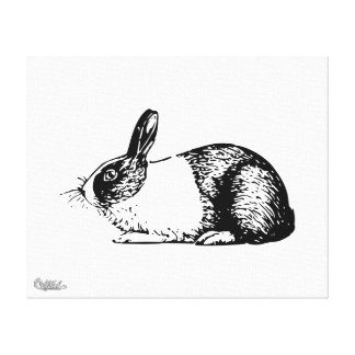 Rabbit Stretched Canvas Prints