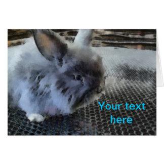 Rabbit Cards