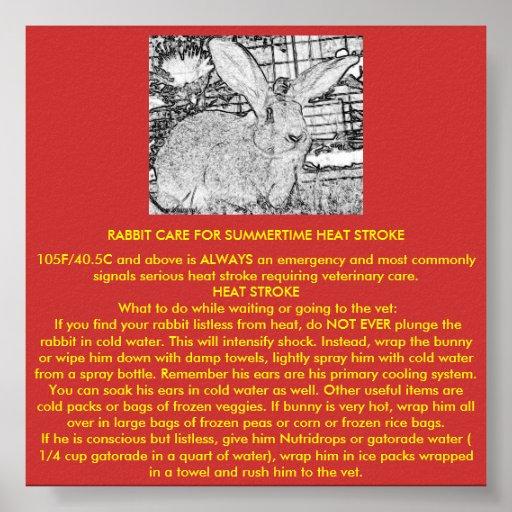 Rabbit Care for Summertime Heat Stroke Poster