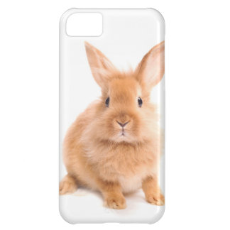 Rabbit Cover For iPhone 5C