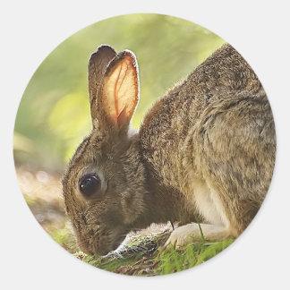 Rabbit Classic Round Sticker