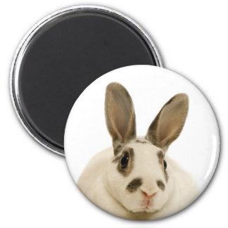 Rabbit Close-Up Fridge Magnet