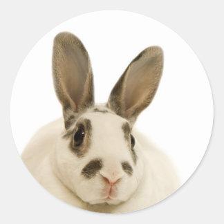 Rabbit Close-Up Round Stickers