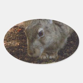 Rabbit Digging Oval Sticker