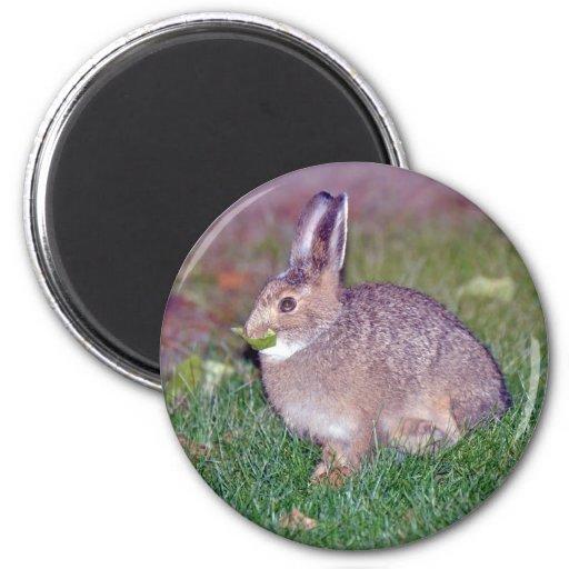 rabbit fridge magnets